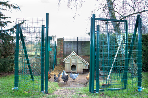 free-ranging-intermediate-cage