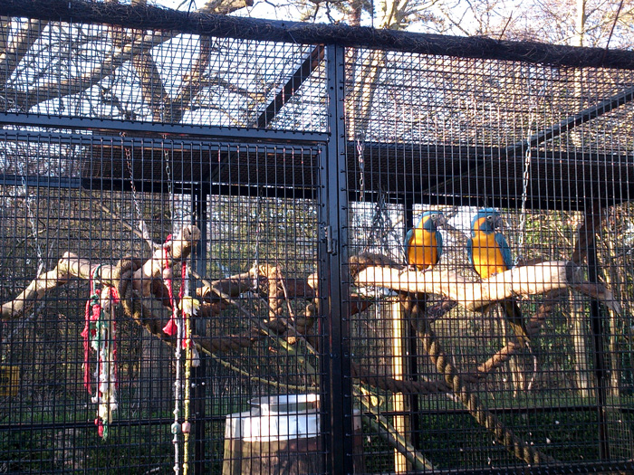 Cages used in Zoo